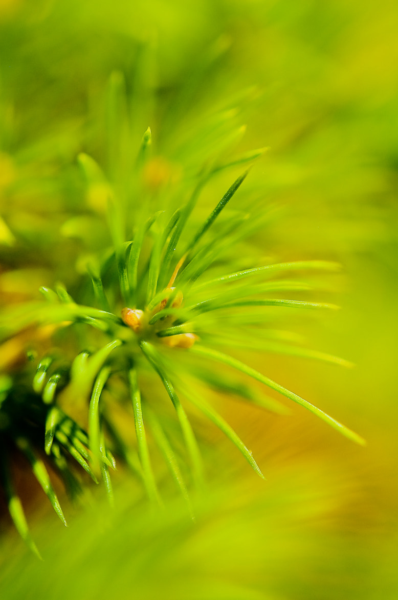 Photograph Pine by Tom Tolkien on 500px