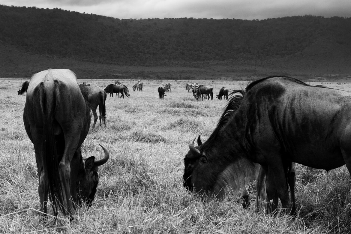 Photograph East Africa  by David Seminatore on 500px