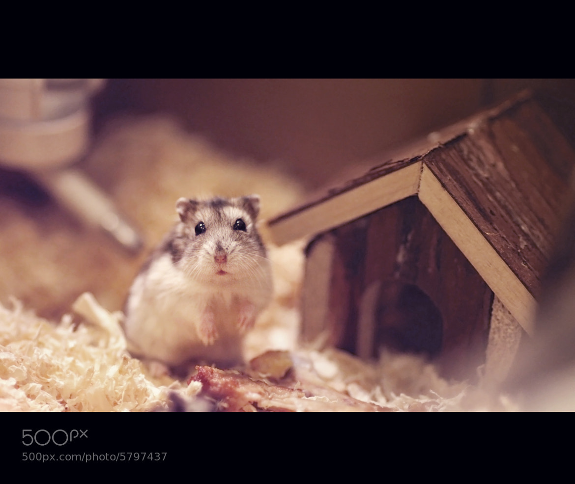 Photograph hello ☮ by NGUYỄN  on 500px