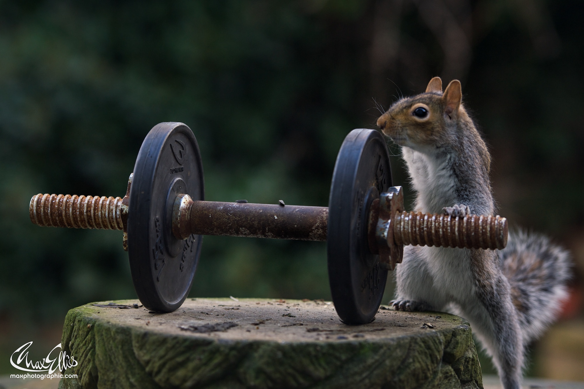 Photograph Arnold Squirrelnegger sequence 2 by Max Ellis on 500px
