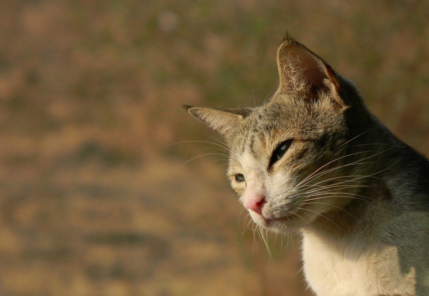 Photograph Pretty Kitty by Milind Mangare on 500px