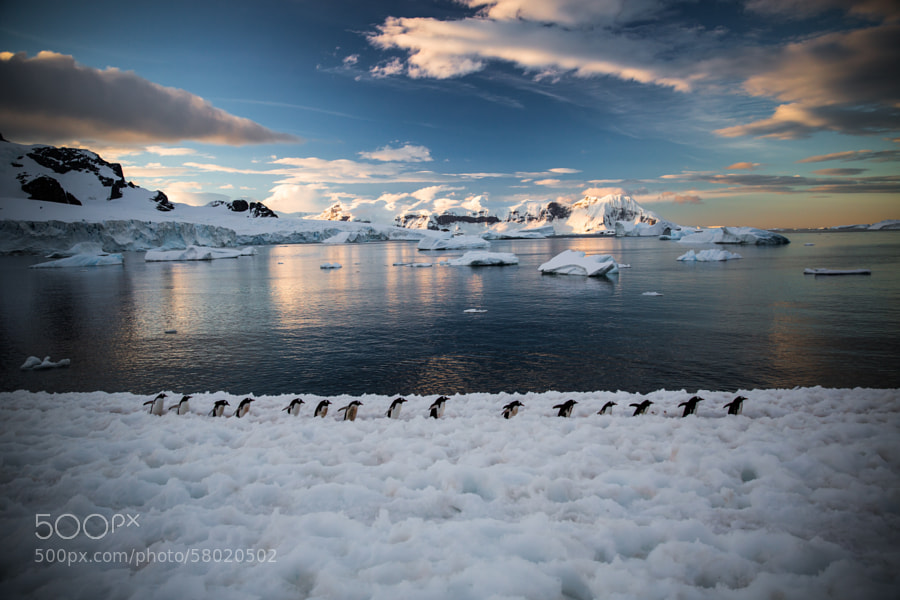 Photograph Penguin Team by mqwilliam on 500px