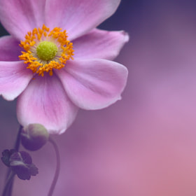 Untitled by EMIKO Ito (EMIKOIto) on 500px.com