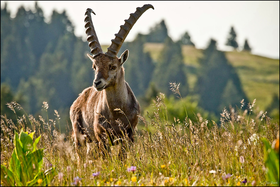 Photograph Mountain King by Jan Geerk on 500px