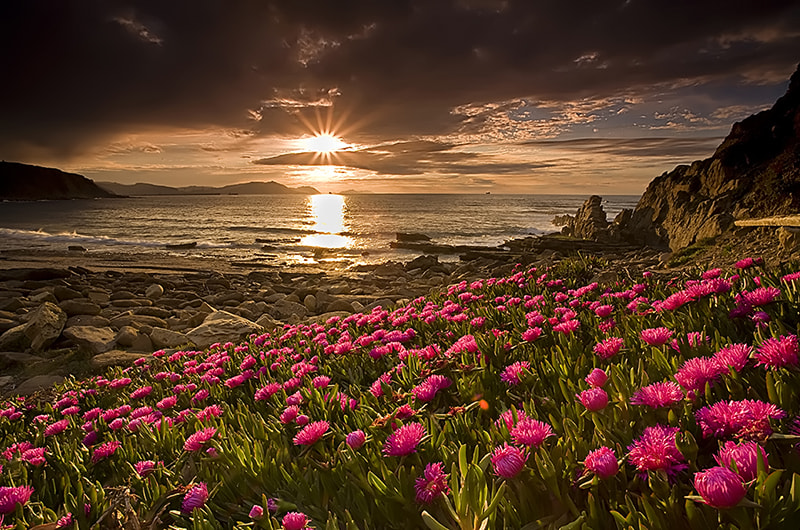 Photograph A garden by the sea II by David Cidre on 500px
