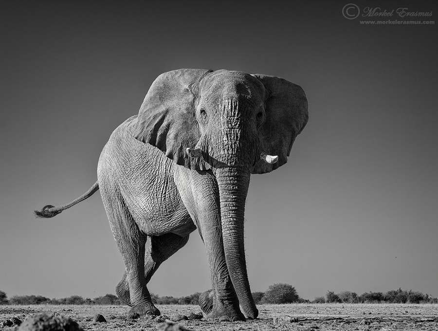 Facing the Giant by Morkel Erasmus on 500px.com