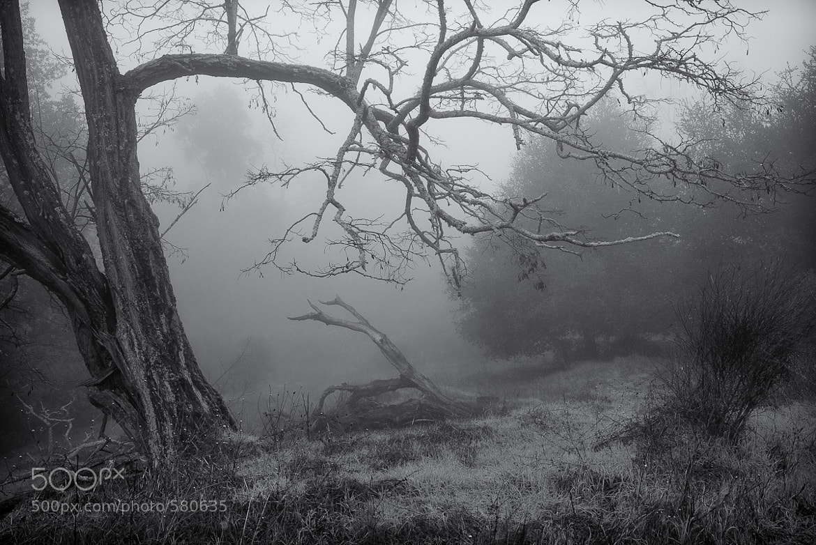 Photograph Into the Mist by Stefan Bäurle on 500px