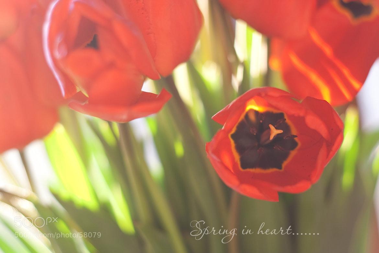 Photograph Spring in heart by Tatiana Chokova on 500px