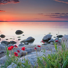 Poppies by the Sea by Evgeni Dinev (evgord)) on 500px.com