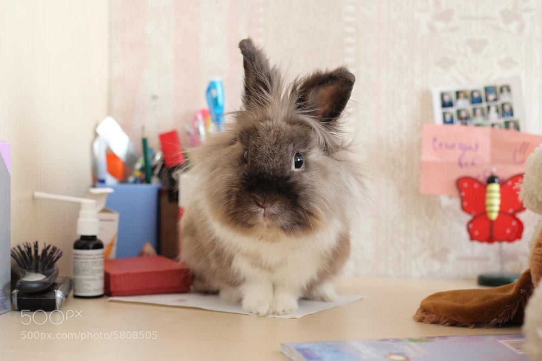 Photograph bunny by Shchepin Dmitry on 500px