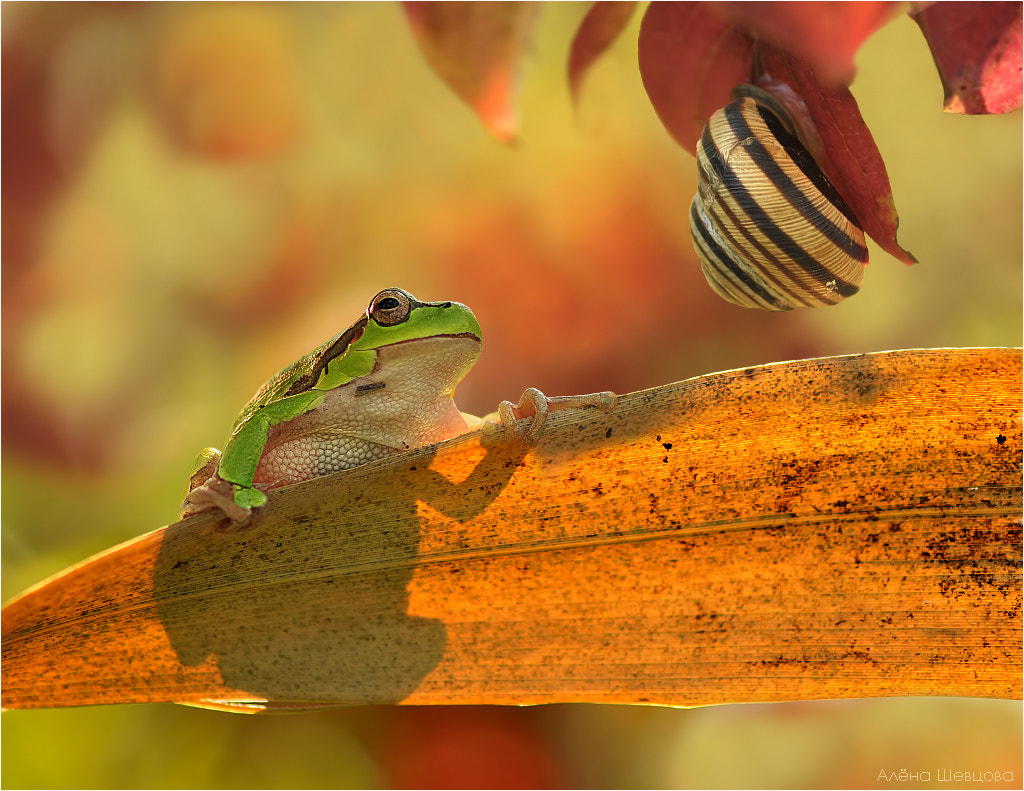 Photograph In the fire of autumn by Aliona Shevtsova on 500px