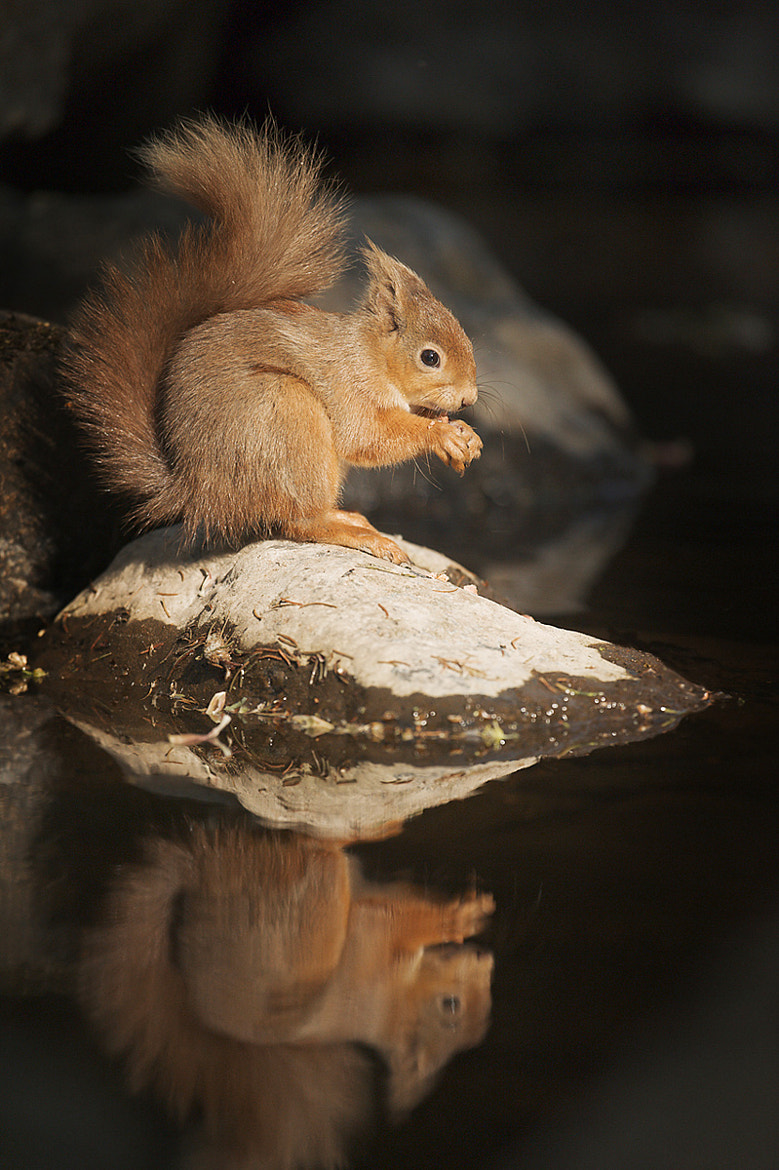 Photograph Red on a rock by Mark Davies on 500px