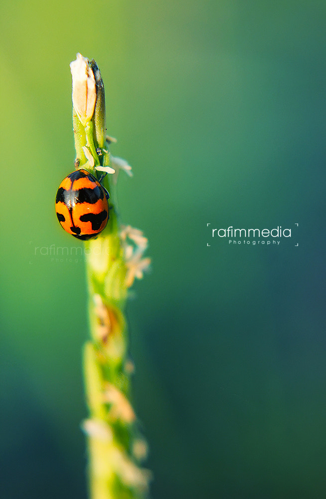 Photograph Lady Bird by Mohamed  Rafi on 500px