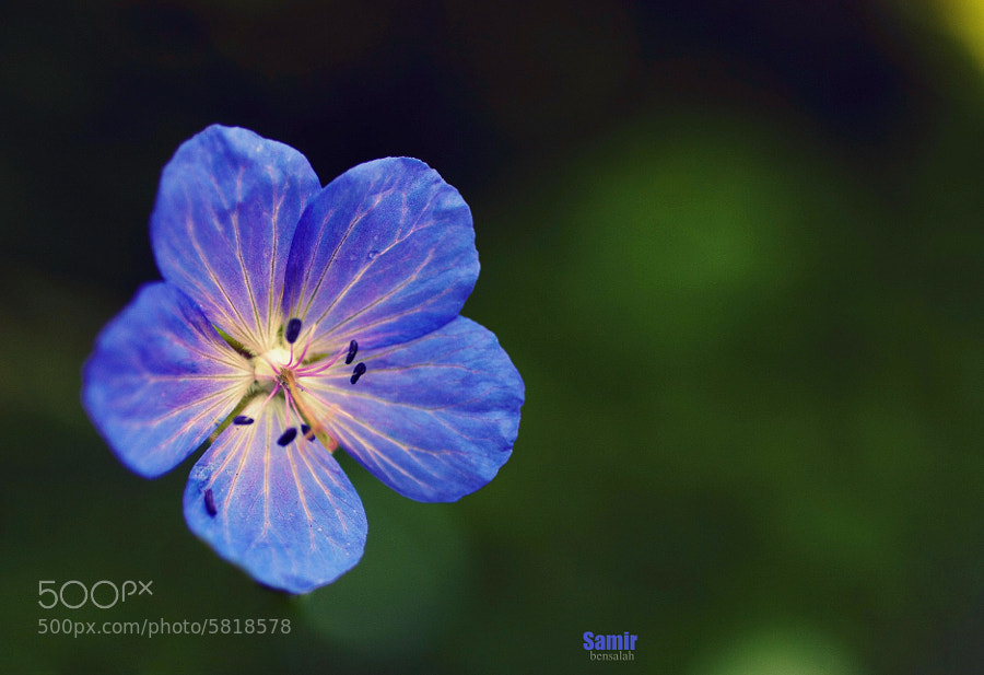Photograph FLOWER by Samir Bensalah  on 500px