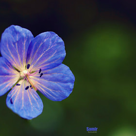 FLOWER by Samir Bensalah  (Samir-bensalah)) on 500px.com