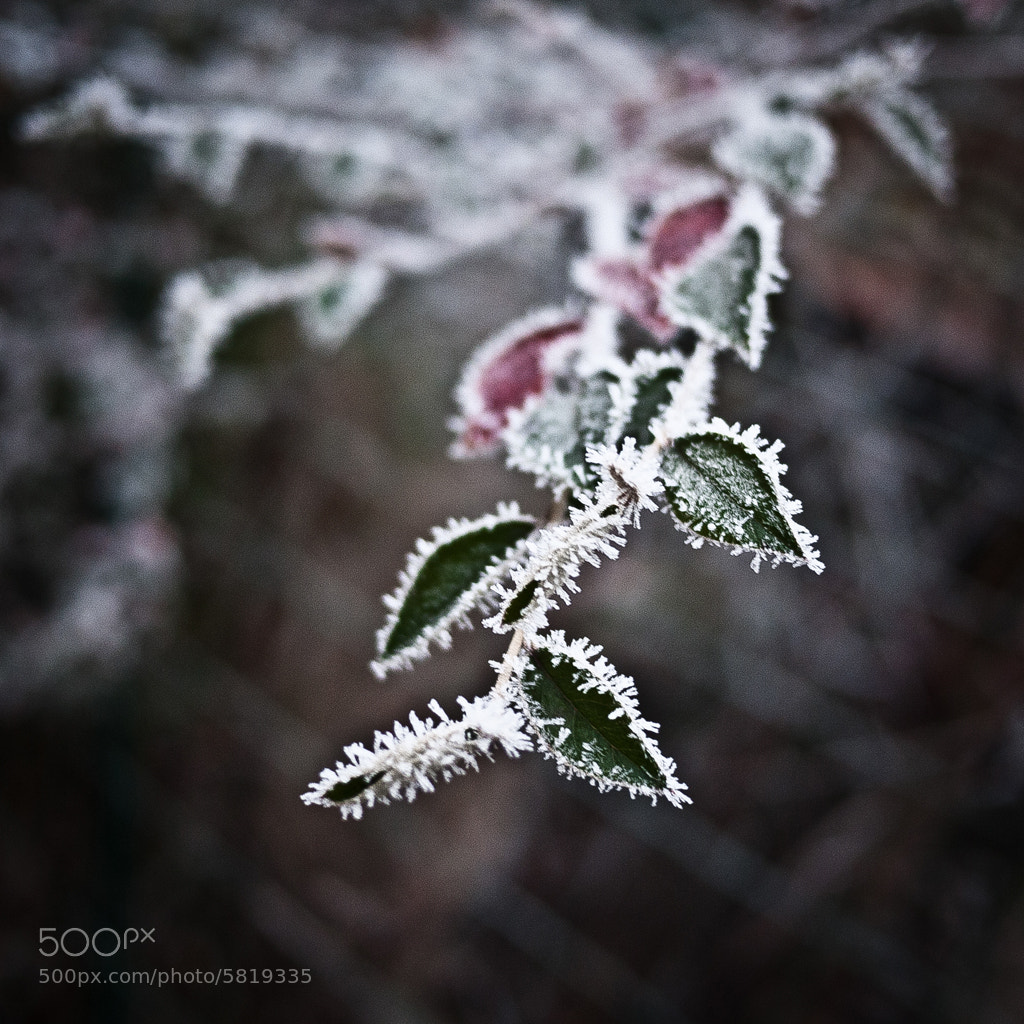 Photograph Frozen by Frantz Ronzeau on 500px