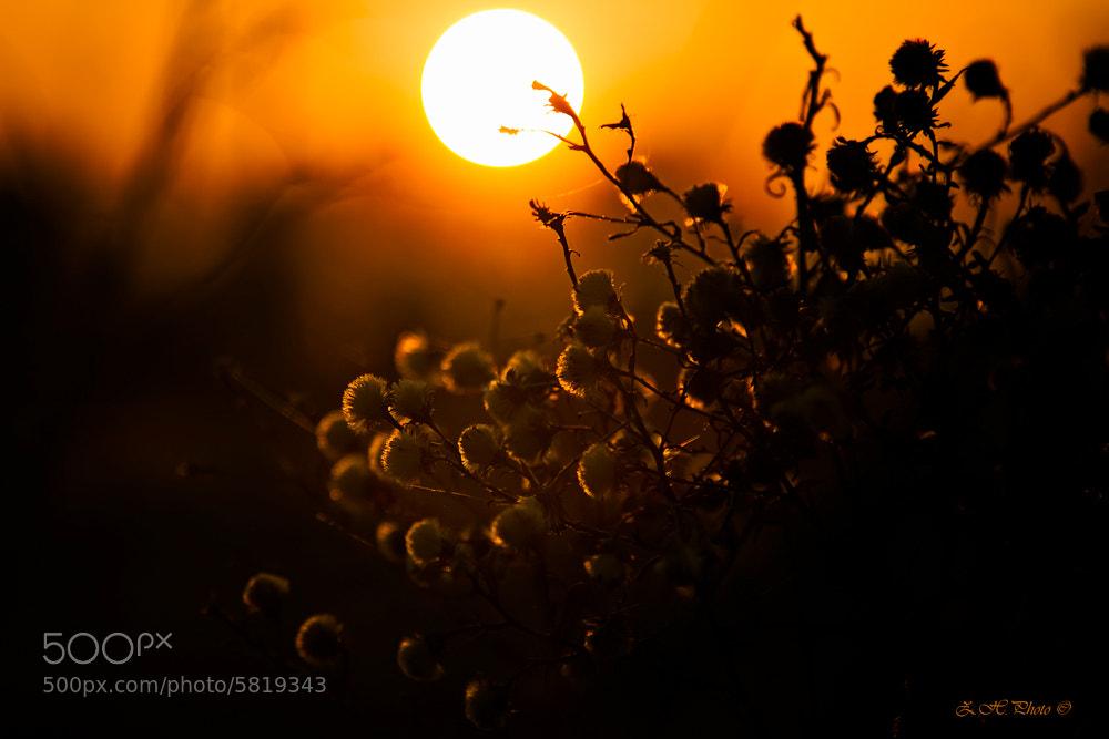 Photograph Good night Sun by Zdravko  Horvat on 500px