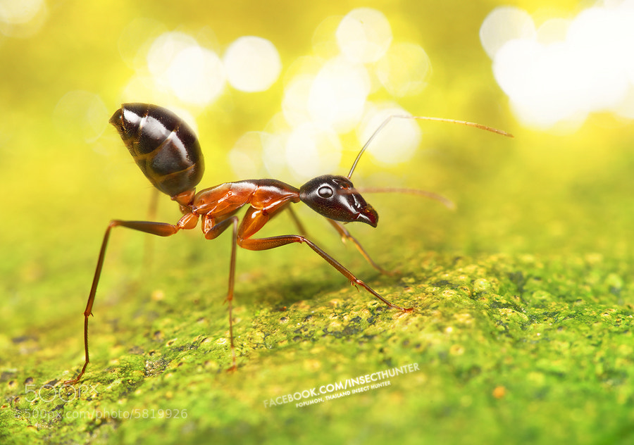 Photograph ANT by POPUMON TiH on 500px