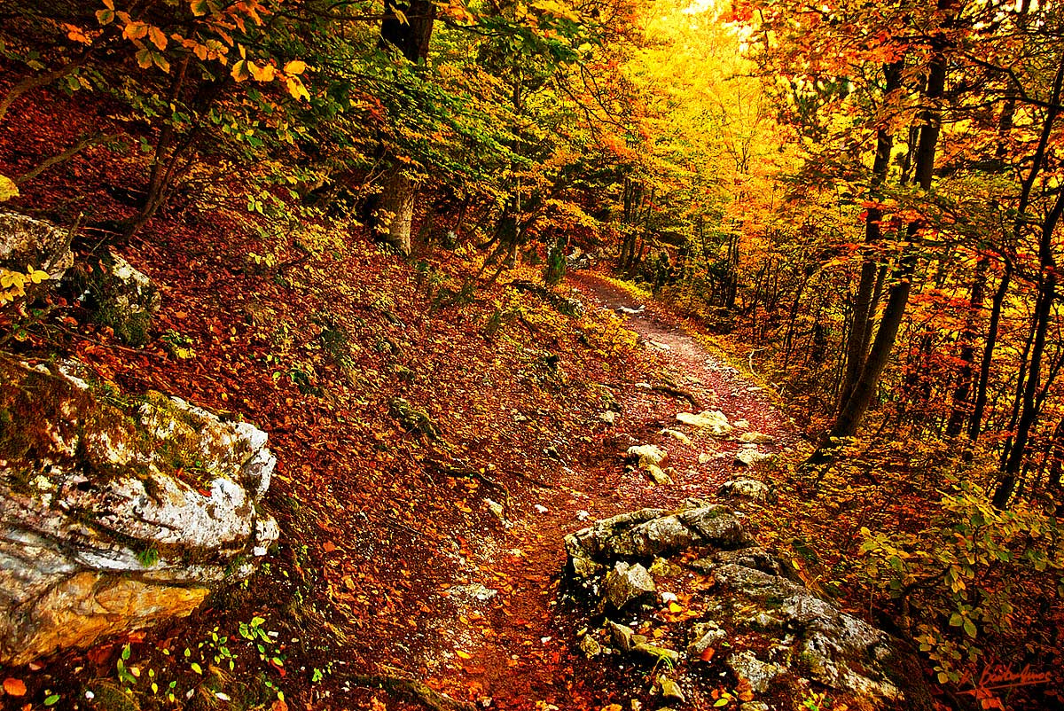 Photograph DEEP IN THE WOODS by Kostas Barbadimos on 500px