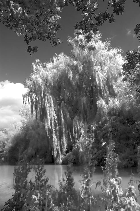 Photograph Tree by canal Hampshire by steve Chatterton on 500px