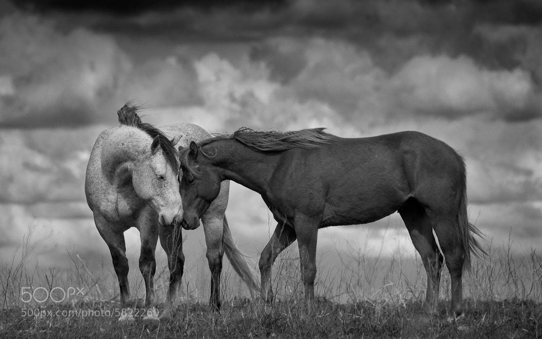 Photograph Stormy Calm by Richard J Hamilton on 500px