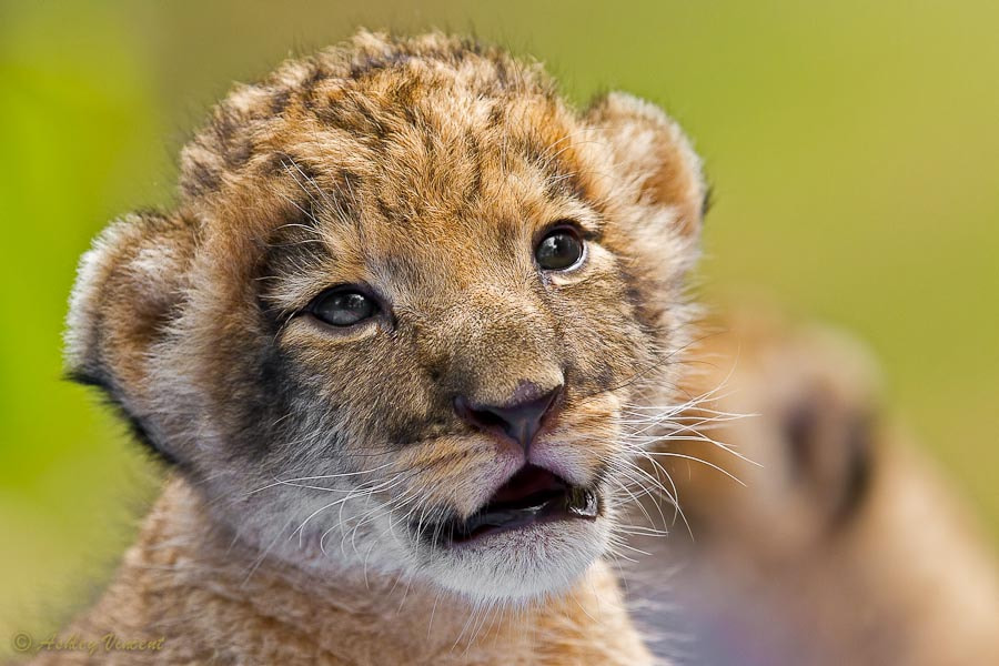 Photograph Age of Innocence by Ashley Vincent on 500px