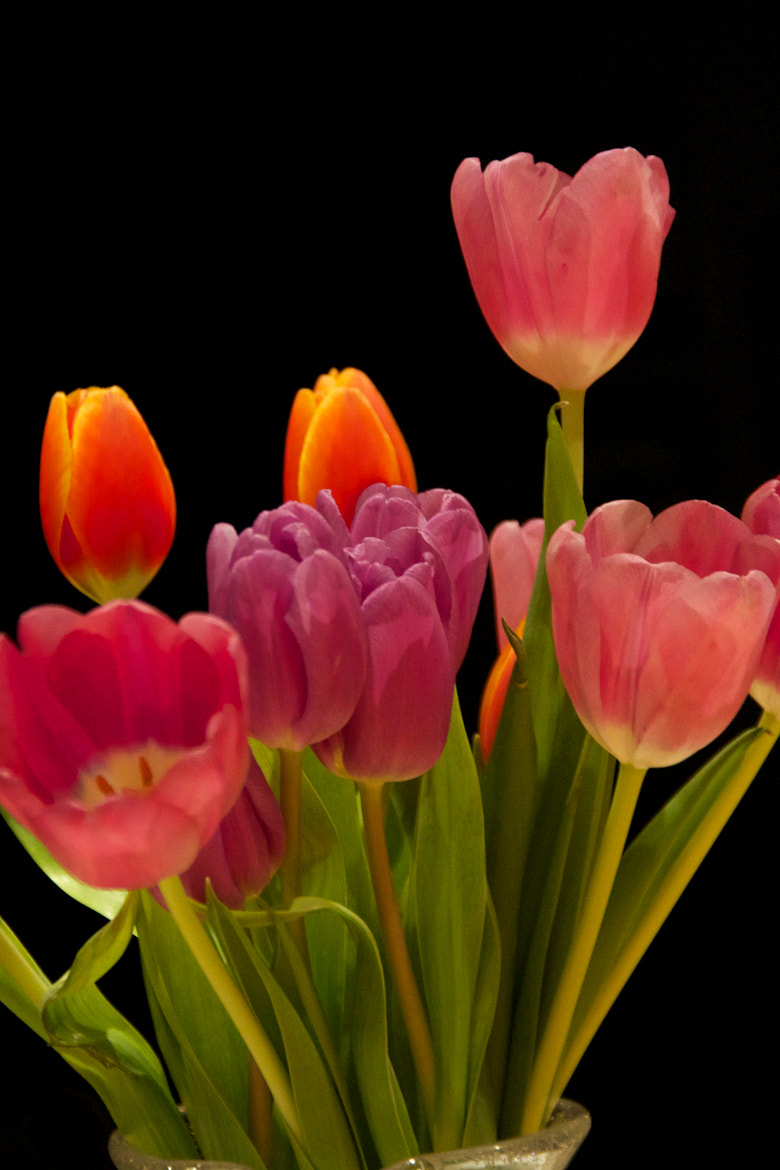 Photograph Neon Tulips by R. Christopher Rogers on 500px