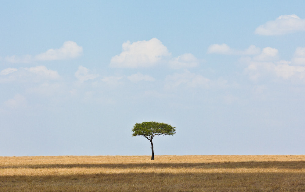 Photograph the tree by cheryl dimont on 500px