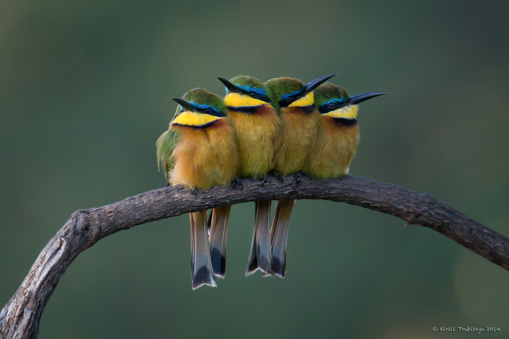 Photograph Two pairs by Kirill Trubitsyn on 500px