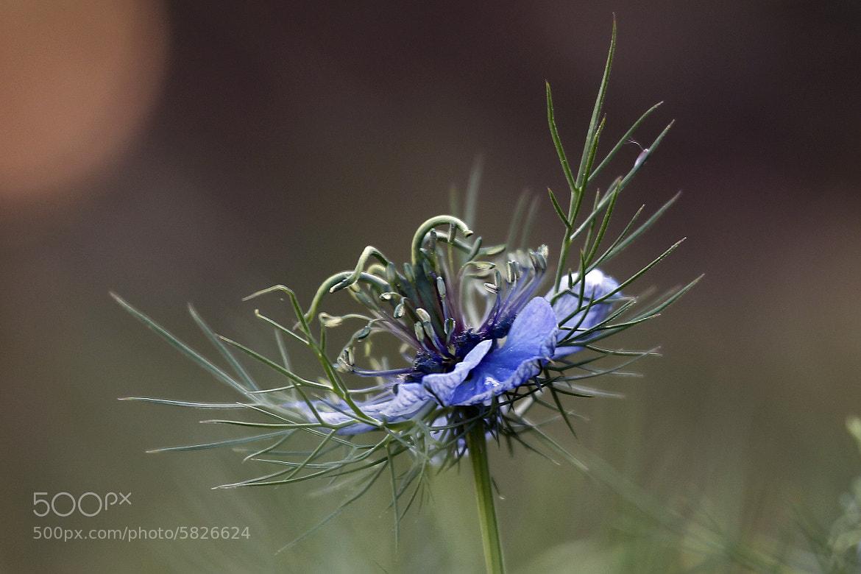 Photograph desert flower by Cristobal Garciaferro Rubio on 500px