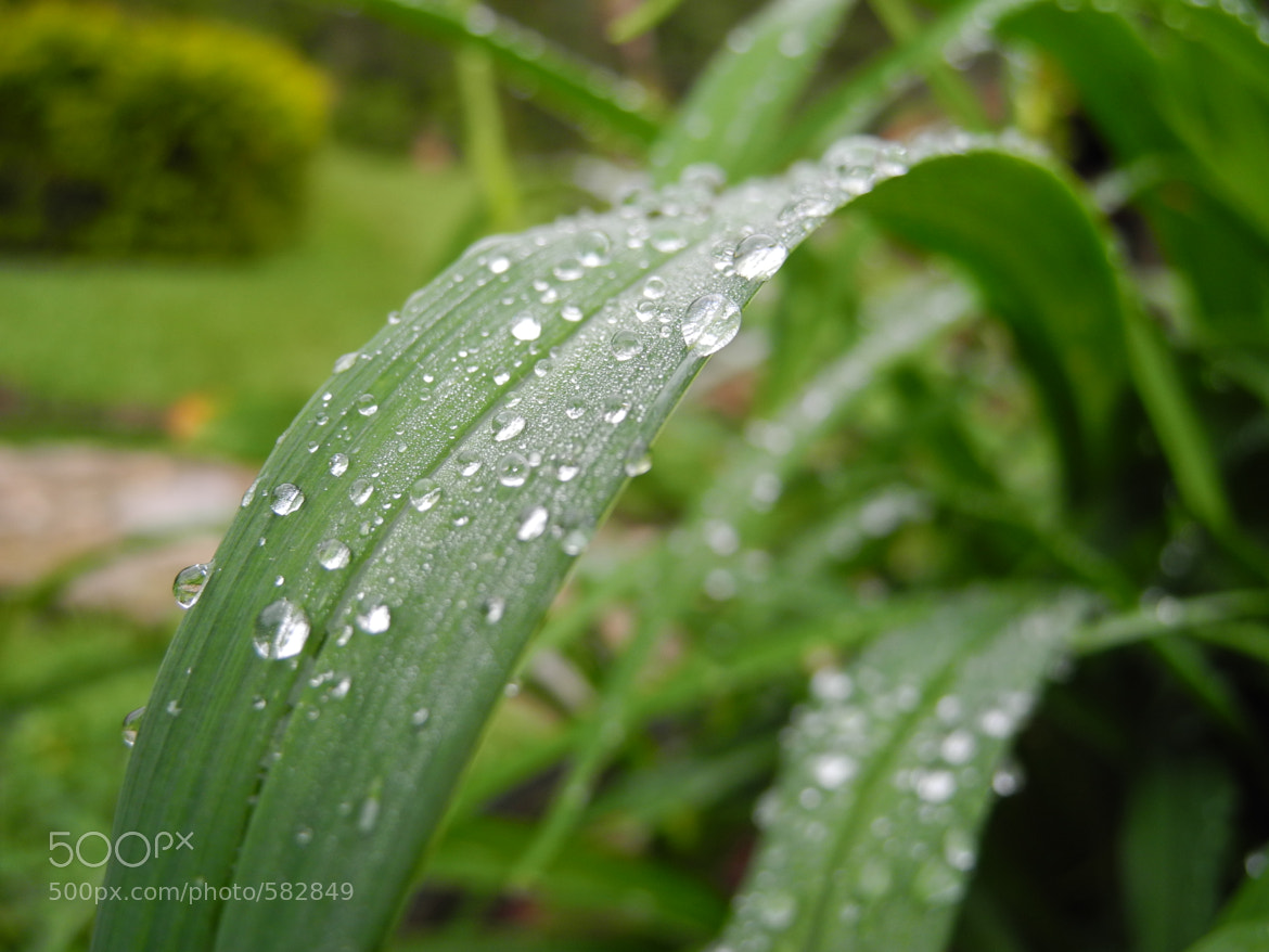 Photograph Green Drops by Oscar David Torres on 500px