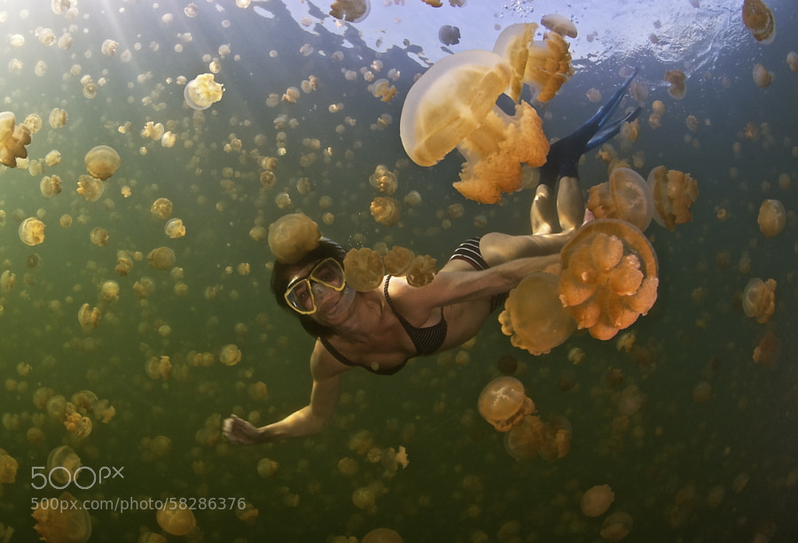 Photograph Snorkel with Jellyfish by Julio Sanjuan on 500px