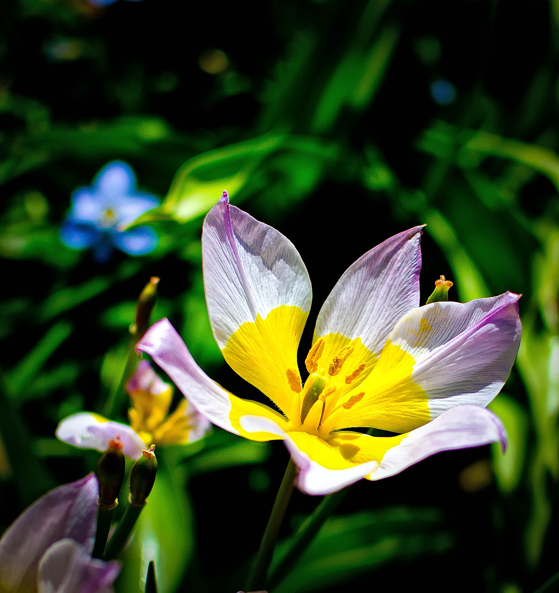 Photograph It's Spring by Ronald Roberts on 500px