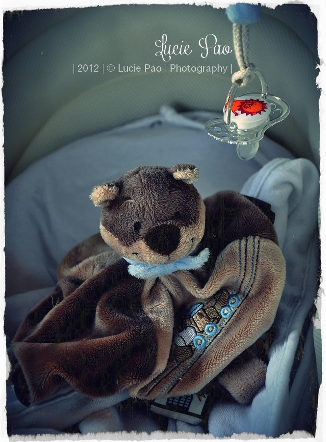 Photograph Petit Ours Brun by Lucie Pao on 500px