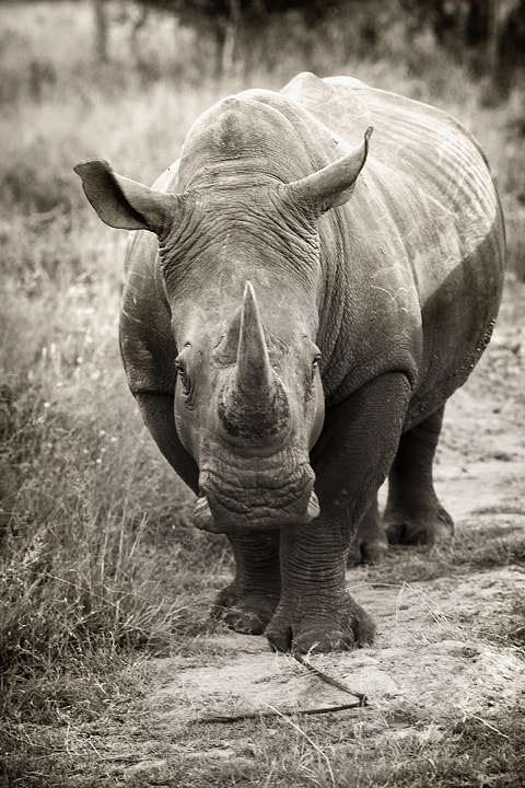 Photograph rhino  by Emmanuel Foto on 500px