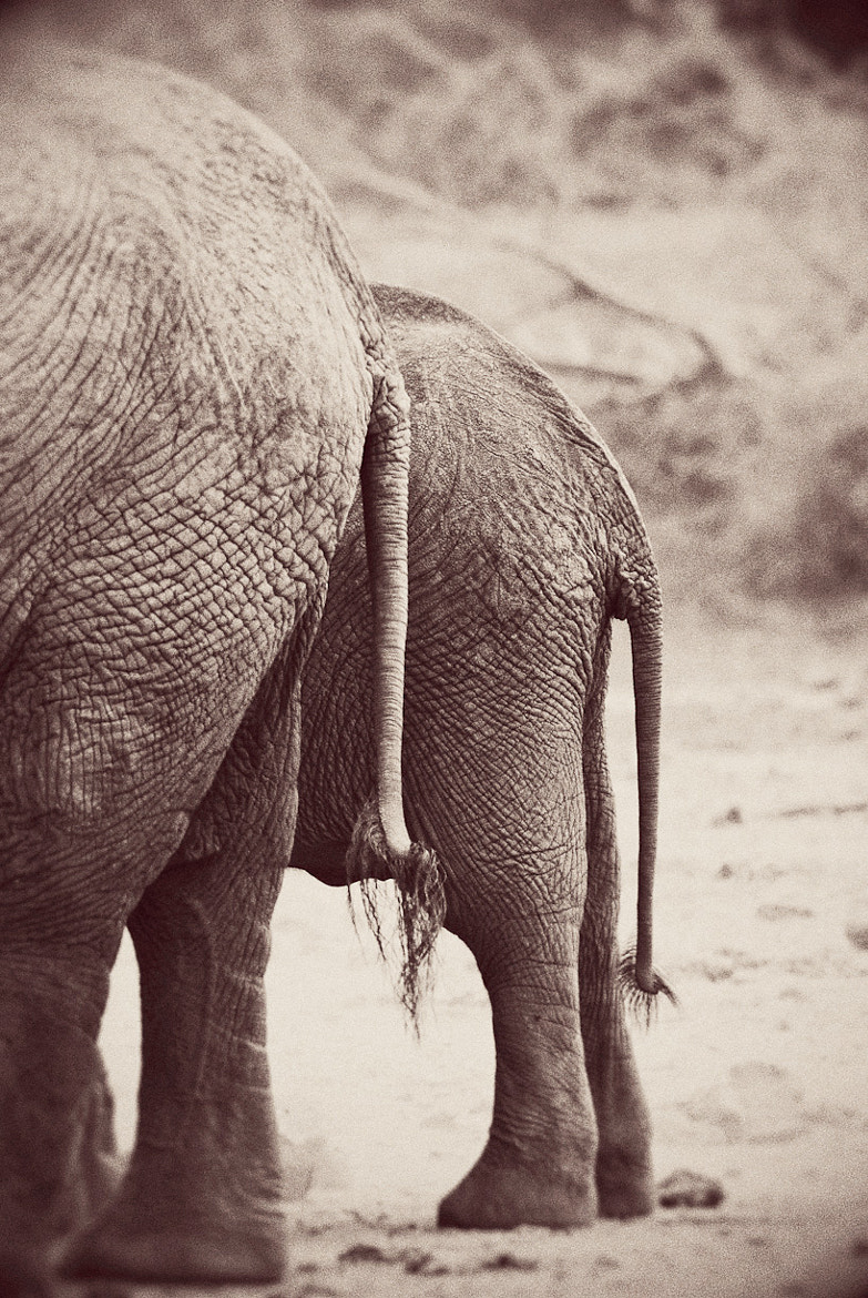 Photograph Elephant tales. by Darren Smith on 500px