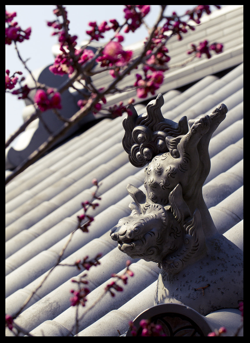 Photograph Temple Roof by Daniel Byron on 500px