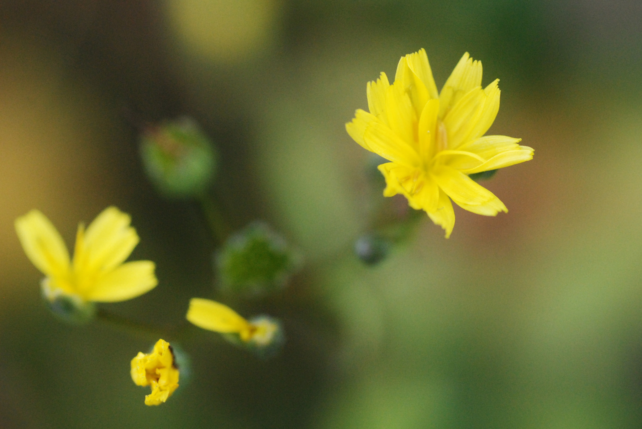 Photograph yellow flower by emily prouse on 500px