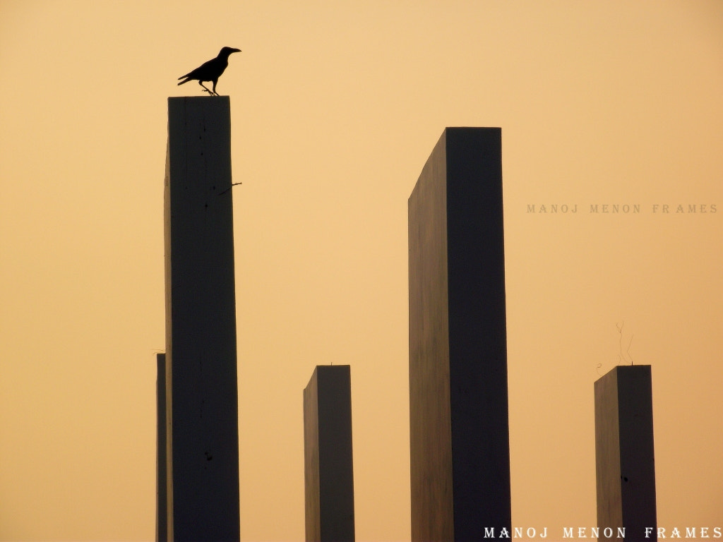 Photograph No one is free , even the birds are chained to sky by Manoj Menon on 500px