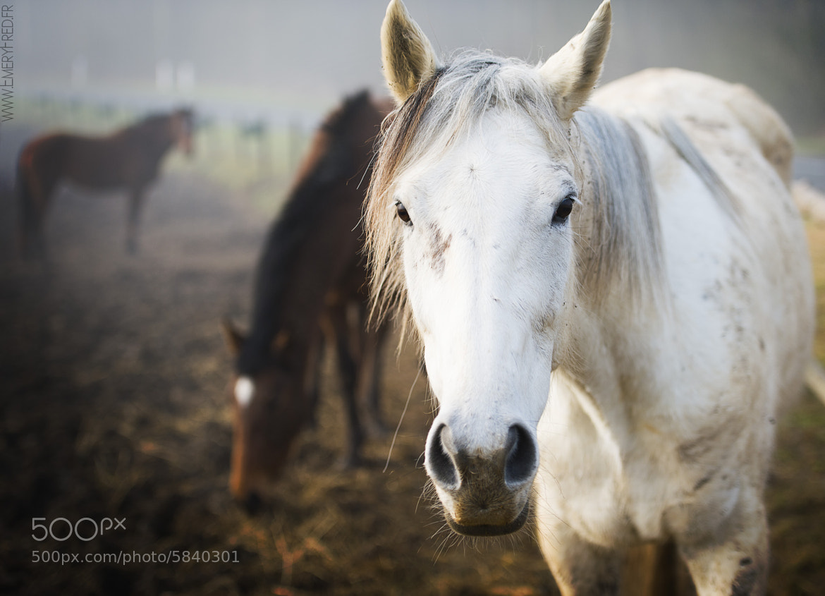 Photograph Curious horse by EMERY FRED on 500px