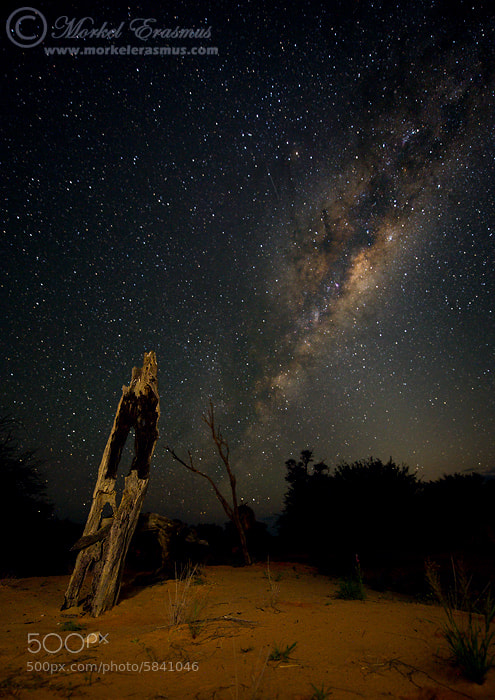 Photograph Kalahari Nights by Morkel Erasmus on 500px