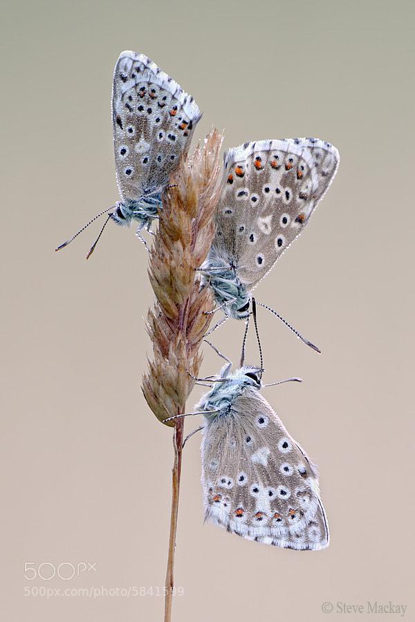 Photograph Trio by Steve Mackay on 500px