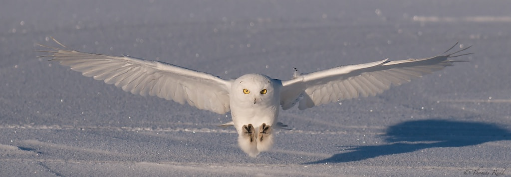 Photograph Snowy Incoming by Tom Redd on 500px