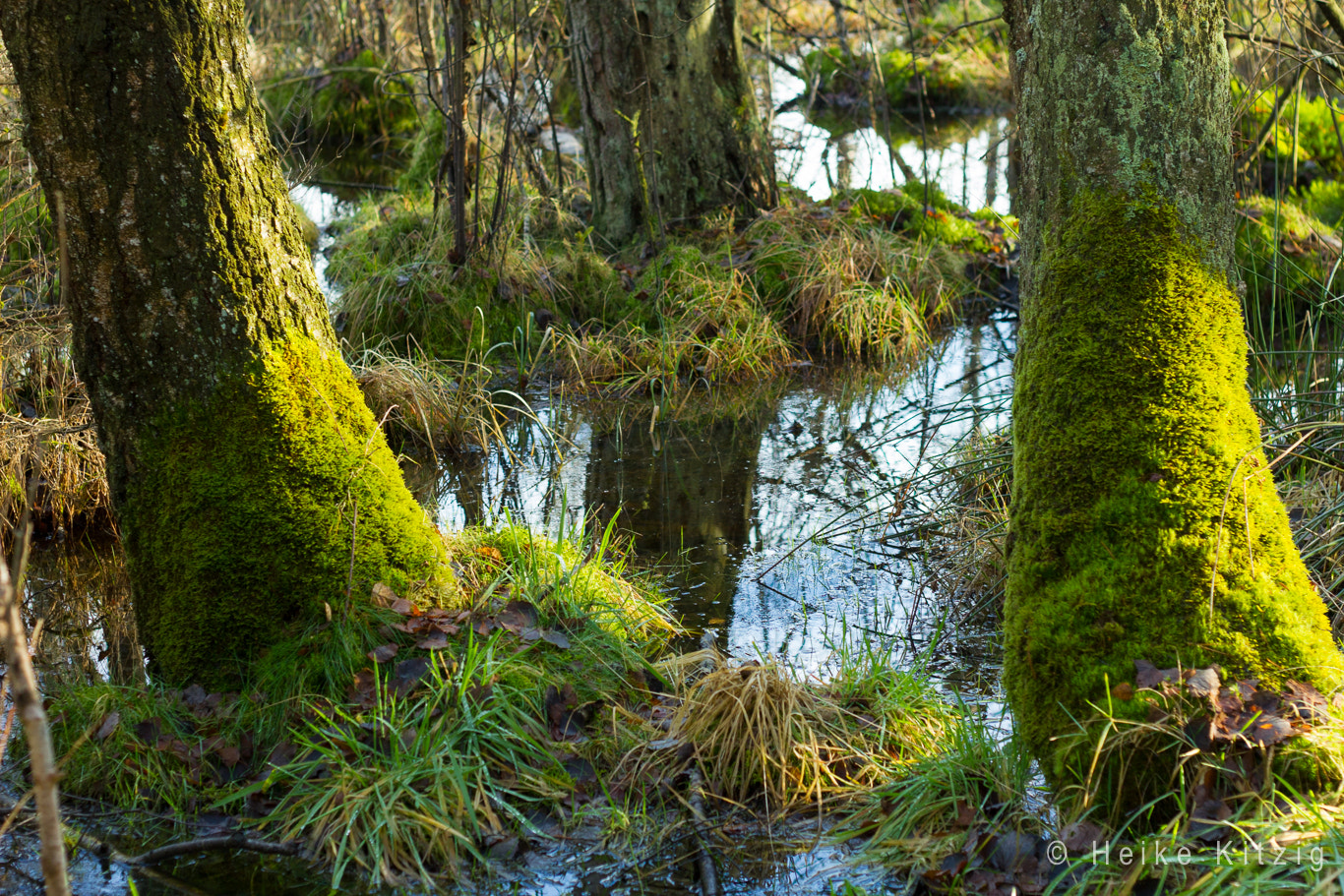 Photograph Moss in Schwenningen Germany by Heike Kitzig on 500px