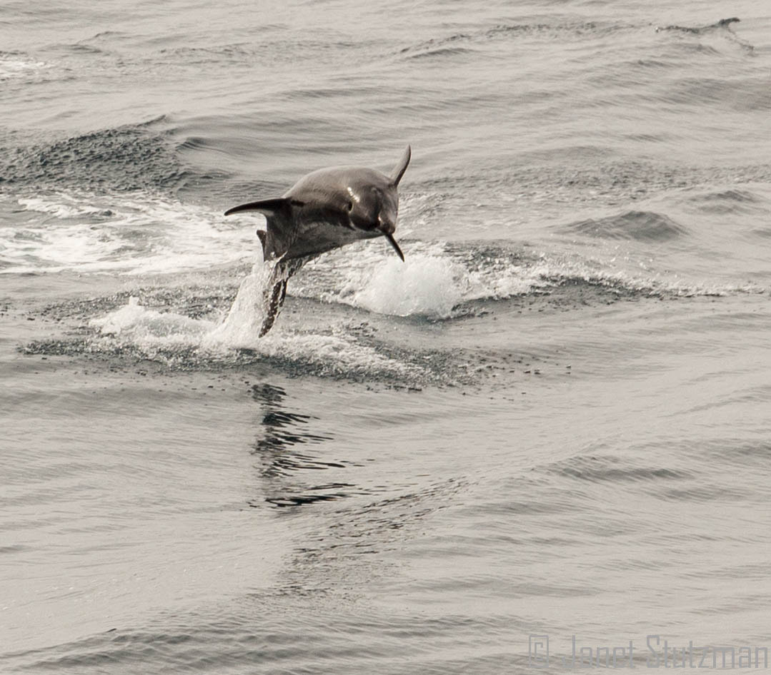 Photograph I know I can swim, perhaps I can fly by Janet Stutzman on 500px