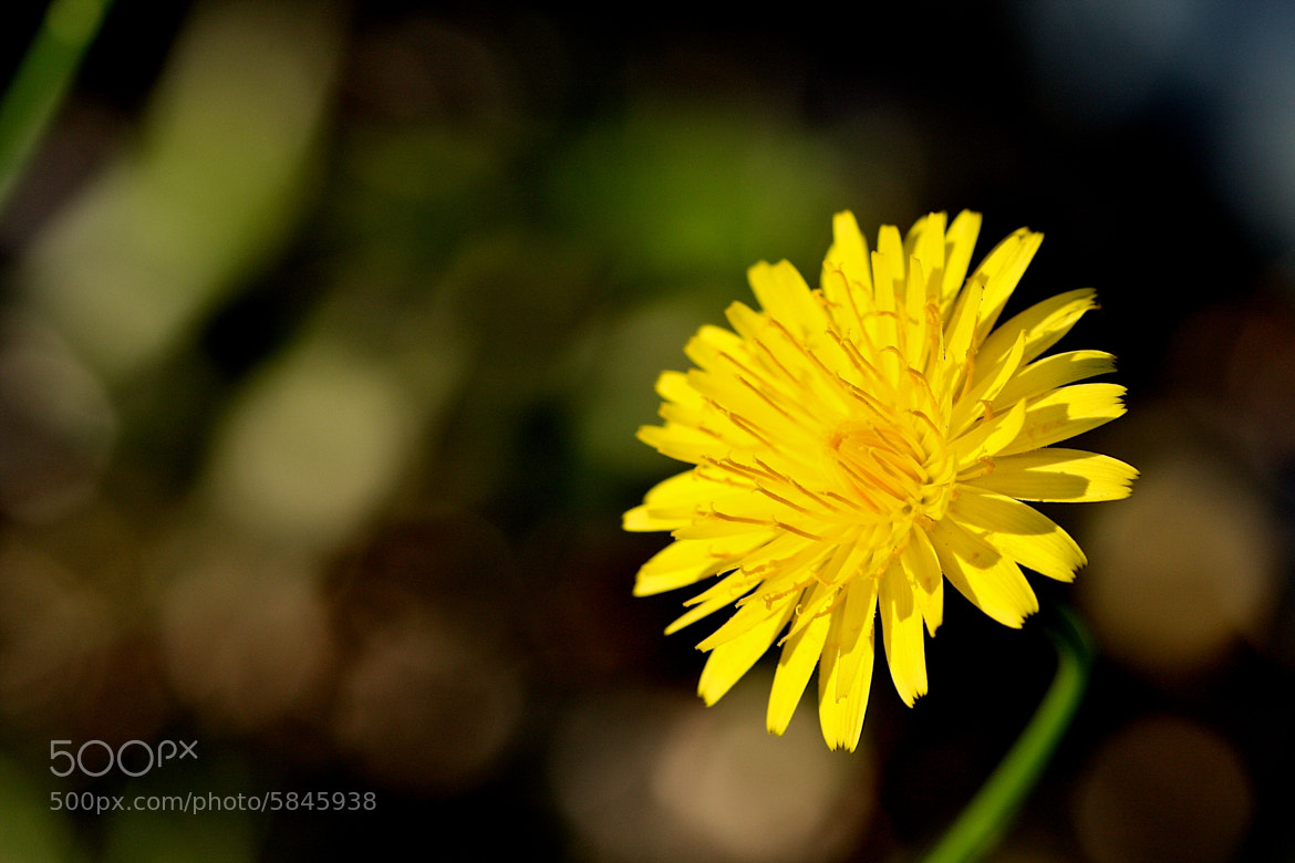 Photograph Yellow by Harsh Brown on 500px