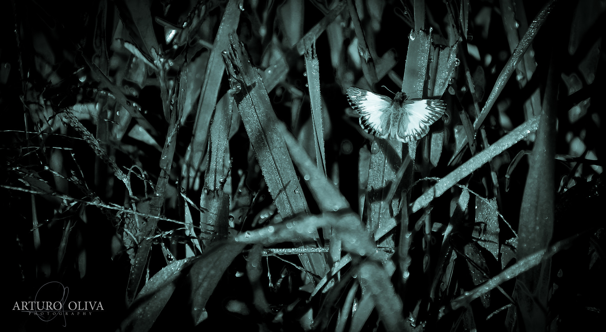 Photograph grass butterfly and light by Arturo Oliva on 500px
