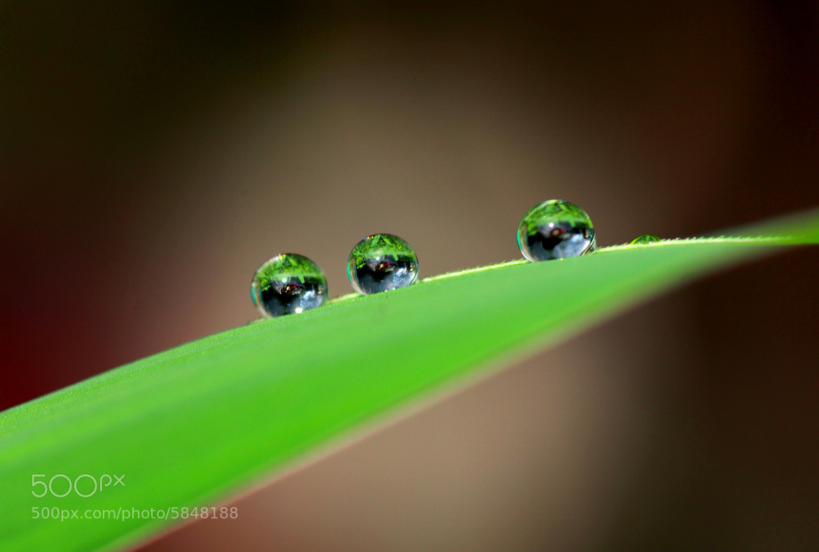 Photograph Drops.. by Susanto Mega on 500px