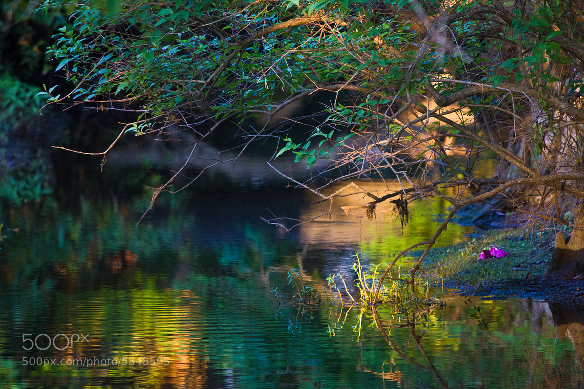 Photograph Something Green by Dorothy Cunningham on 500px