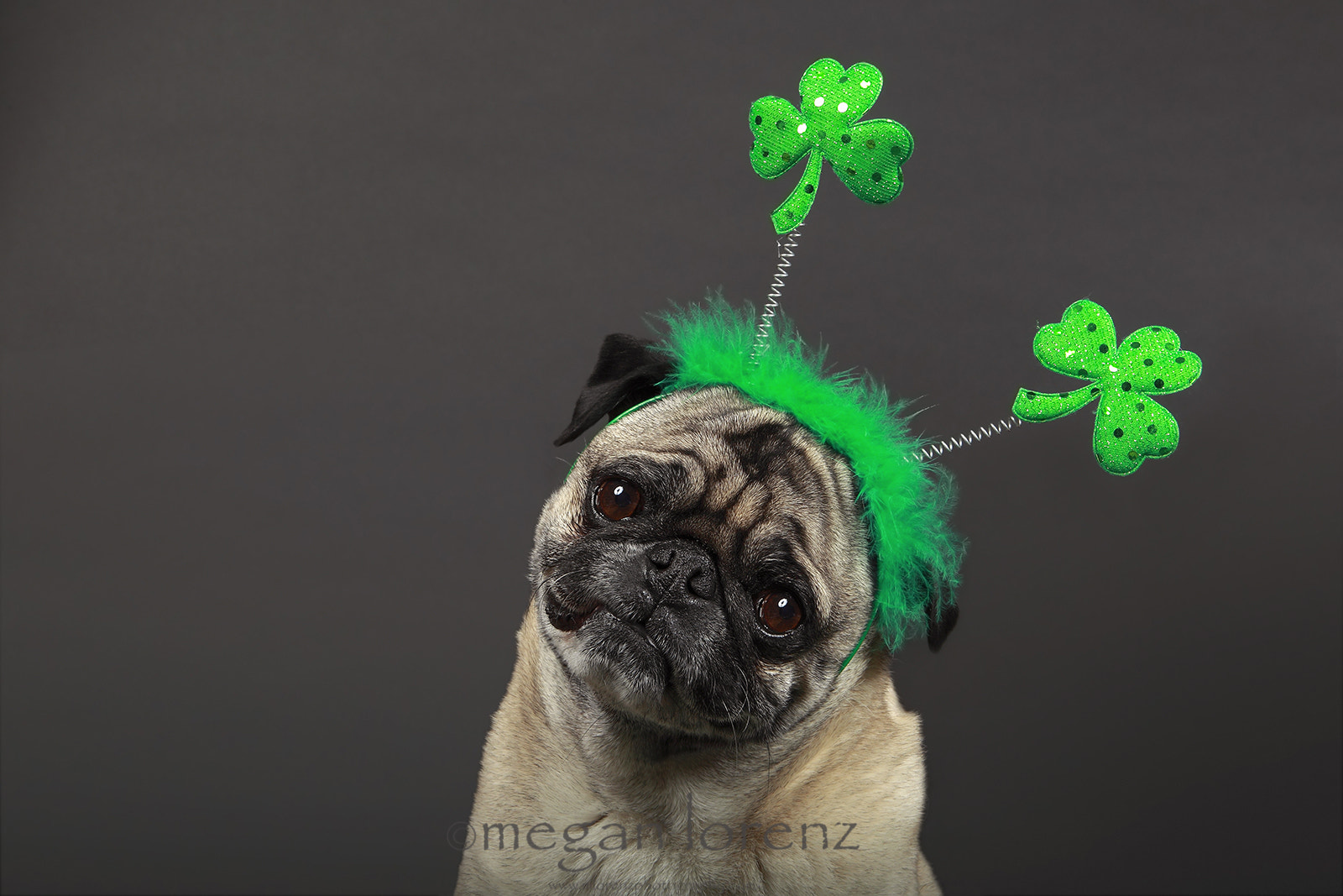 Photograph Happy St. Patrick's Day! by Megan Lorenz on 500px